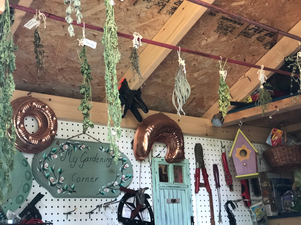 Drying Herbs in my Garden Shed