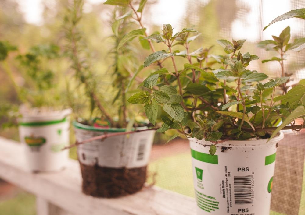 Nursery Herbs